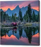 Teton Moose Canvas Print