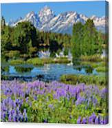 Tetons And Lupines Canvas Print