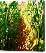 The Corn Maze #2 Canvas Print