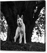 The Dog And The Tree Canvas Print