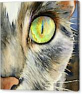 The Eye Of The Kitty Canvas Print