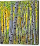 The Gentleness Of Aspens 1 Canvas Print