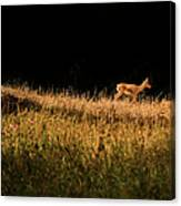 The Lonely Deer Canvas Print