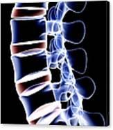 The Lumbar Vertebrae Canvas Print