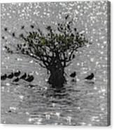 The Mangrove Canvas Print