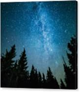 The Milky Way Rises Over The Pine Trees Canvas Print