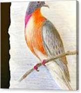 The Passenger Pigeon  Canvas Print