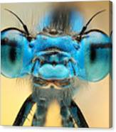The Picture Shows A Beautiful  Damesfly Canvas Print