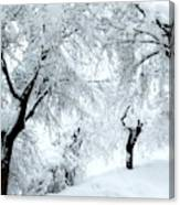 The Pure White Of Snow Canvas Print