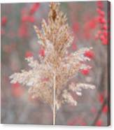 The Red Of Winter Canvas Print