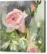 The Rose From A Misty Appalachia Canvas Print
