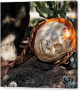 The Sleeping Pumpkinman  Canvas Print