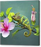 The Veiled Chameleon Of Florida Canvas Print