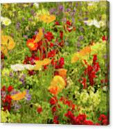 The World Laughs In Flowers - Poppies Canvas Print