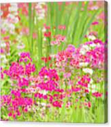 The World Laughs In Flowers - Primula Canvas Print