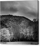 The Yellow Tree In Black And White Canvas Print