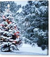 This Snow Covered Christmas Tree Stands Canvas Print