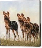 Three African Wild Dogs Canvas Print