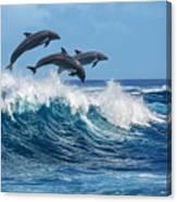 Three Beautiful Dolphins Jumping Canvas Print