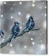 Three Blue Jays In The Snow Canvas Print