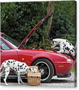 Three Dalmatians Around Red Sports Car Canvas Print