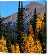 Thunder Mountain Aspens Canvas Print