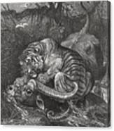 Tiger Attacks A Water Buffalo, Wood Canvas Print