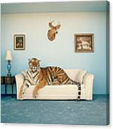 Tiger On Sofa Under Animal Trophy Canvas Print