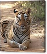 Tiger Sitting On Field Canvas Print