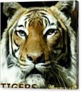 Tigers Mascot 4 Canvas Print