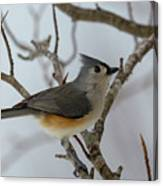 Titmouse Winter Morning Cutie  Canvas Print