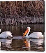 To Pelicans Trolling For Fish Canvas Print