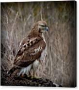 Totem Animal Book Hawk Canvas Print