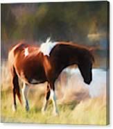 Totem Animal Book Horse Canvas Print