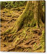 Trail Of Roots Canvas Print
