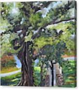 Tree At Cartecay Canvas Print