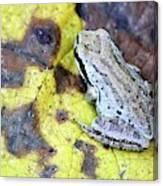 Tree Frog On Yellow Leaf Canvas Print