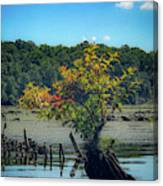 Tree In Mallows Bay Canvas Print