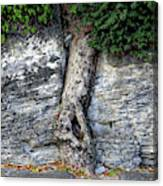 Tree In Stone Canvas Print