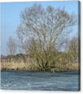 Tree On Frozen Lake Canvas Print