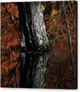 Tree Reflects In The Pond Canvas Print