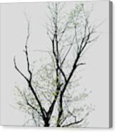 Tree Series Five Canvas Print