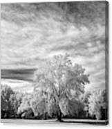 Trees In Florida Canvas Print