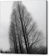 Trees In Winter Without Leaves Canvas Print