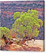 Trees Plateau Valley Colorado National Monument 2871 Canvas Print