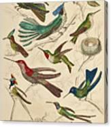 Trochilus - Hummingbirds Canvas Print