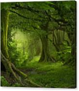 Tropical Jungle In Southeast Asia Canvas Print
