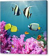 Tropical Reef Fish Over Soft Corals Canvas Print