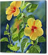 Tropical Yellow Orange Hibiscus With Background Canvas Print