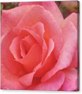 Truly Pink  Canvas Print